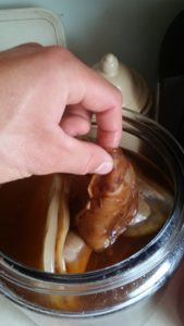 A picture of a left hand holding a scoby to show the thickness.