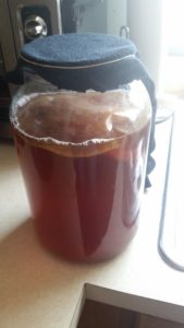 A picture of a scoby and brewing Kombucha in a glass jar with black fabric held on the top with a rubber band.